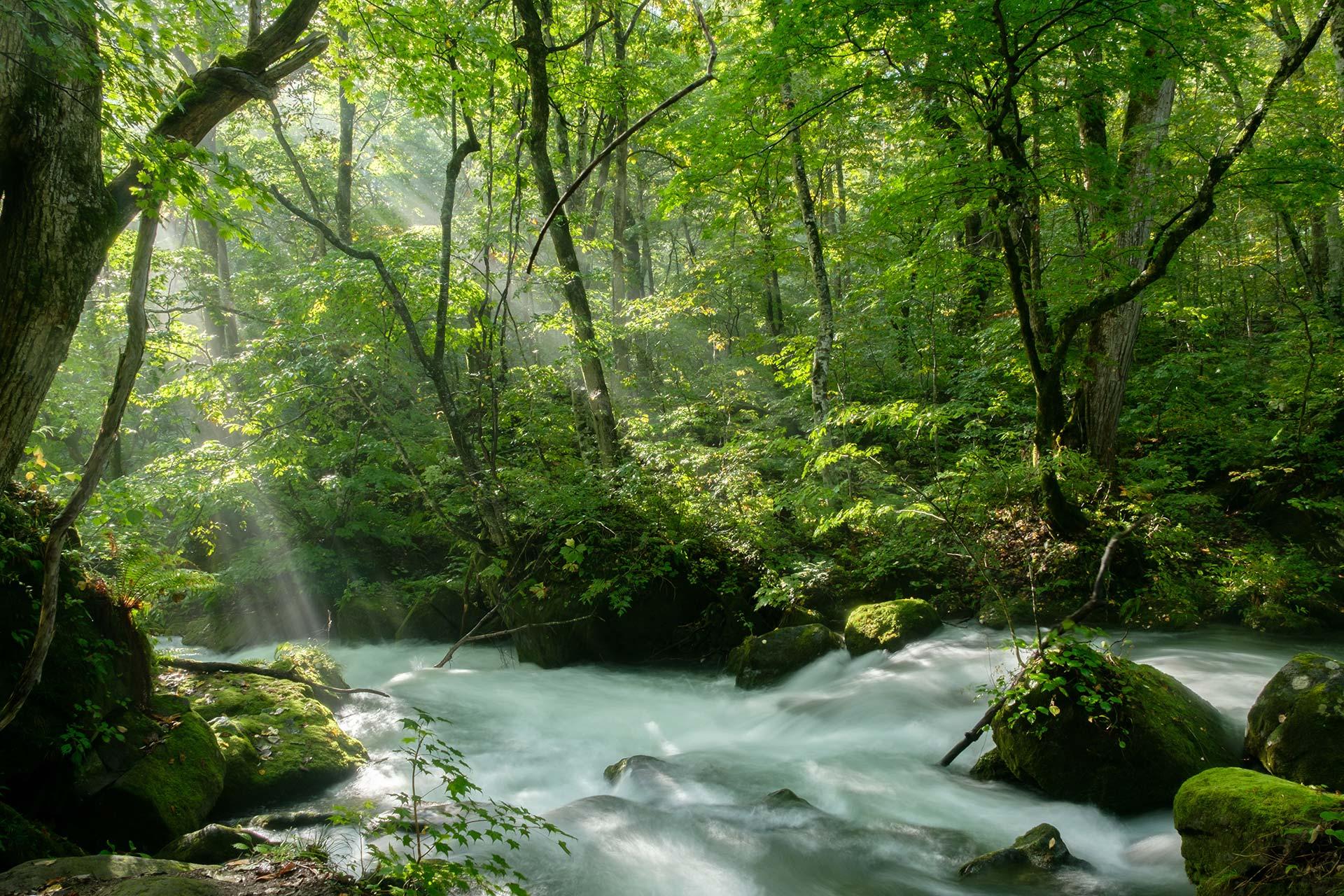 Umweltschutz - mystisch anmutender Wald in einem Naturschutzgebiet